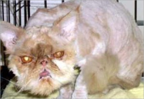 ugliest pets so far the nature animals